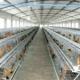 国内外养殖场组合阶梯式A字三层蛋鸡笼