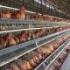 广州专供出口四层四门A字型养殖类蛋鸡笼厂家