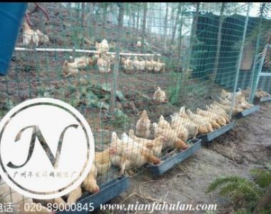 养鸡场围网